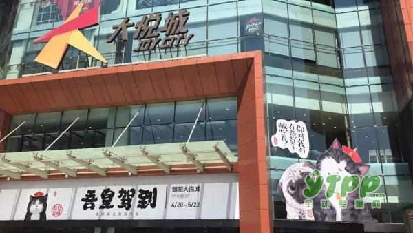 从拉斯维加斯到上海:中国迎来IP授权热潮