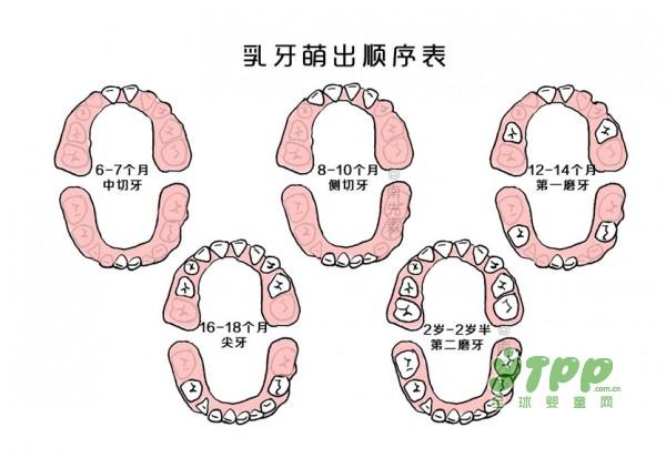 口腔结构图与名称