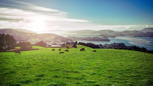 见证纯净好奶源 喝高培臻爱奶粉赢新西兰探秘之旅