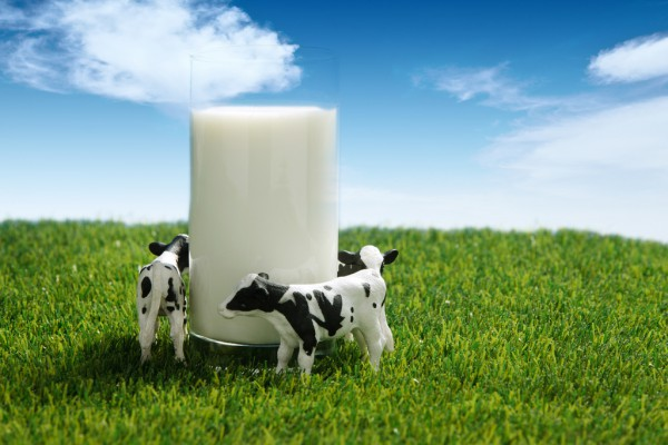 草饲液态奶能否引领新风潮?