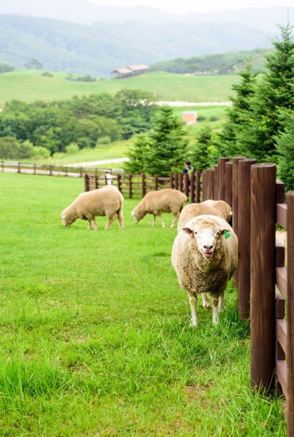 老牌羊乳企业红星美羚全产业链布局发展 自主生产羊乳清粉 解决供给瓶颈