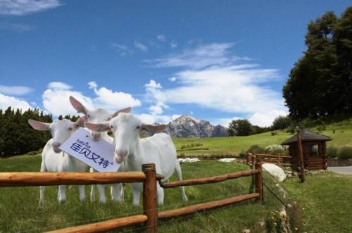 佳贝艾特——羊奶粉排行榜十强之一 以雄厚实力赢得万千妈妈的心